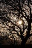 ajardine com um contorno de uma árvore na luz do por do sol Imagens de Stock