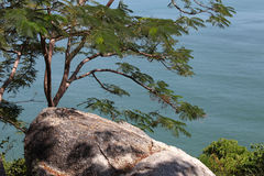 Ajardine com um grande pedregulho, uma árvore e o oceano Imagem de Stock
