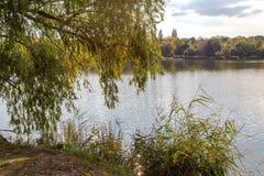 Ajardine com um lago, as árvores e o brilho do sol Por do sol acima do lago Foto de Stock Royalty Free