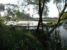 Ajardine com um lago, campo, árvores Fotos de Stock Royalty Free