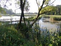 Ajardine com um lago, campo, árvores Fotografia de Stock Royalty Free