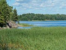 Ajardine com um lago da floresta e uma trepadeira Fotos de Stock