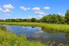 Ajardine com um lago da floresta/paisagem rural em um dia de verão/ Fotos de Stock Royalty Free