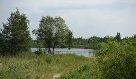 Ajardine com um lago, um prado e as árvores no verão Fotografia de Stock