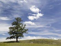 Ajardine com um larício, o céu azul e as nuvens Foto de Stock Royalty Free