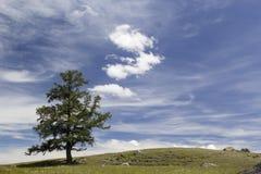 Ajardine com um larício, o céu azul e as nuvens Fotografia de Stock