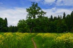 Ajardine com um prado de florescência no parque Foto de Stock Royalty Free