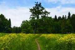 Ajardine com um prado de florescência no parque Foto de Stock