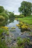 Ajardine com um rio e umas flores amarelas, Bogolubovo, Rússia Imagens de Stock Royalty Free