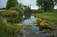 Ajardine com um rio e umas flores amarelas, Bogolubovo, Rússia Imagem de Stock Royalty Free