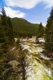 Ajardine com um rio que corre através de uma floresta do pinho no moun Fotos de Stock