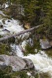 Ajardine com um rio que corre através de uma floresta do pinho no moun Foto de Stock Royalty Free