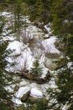 Ajardine com um rio que corre através de uma floresta do pinho no moun Imagem de Stock Royalty Free