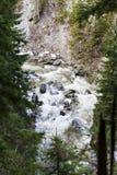 Ajardine com um rio que corre através de uma floresta do pinho no moun Foto de Stock