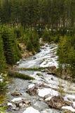 Ajardine com um rio que corre através de uma floresta do pinho no moun Fotografia de Stock
