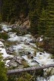 Ajardine com um rio que corre através de uma floresta do pinho no moun Fotografia de Stock Royalty Free