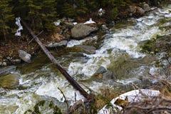 Ajardine com um rio que corre através de uma floresta do pinho no moun Imagens de Stock Royalty Free