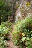 Ajardine com um trajeto entre as rochas e os ferns Fotografia de Stock