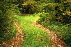 Ajardine com um trajeto na floresta do outono Imagens de Stock Royalty Free