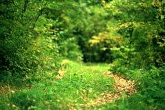 Ajardine com um trajeto na floresta do outono Foto de Stock Royalty Free