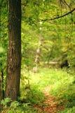 Ajardine com um trajeto na floresta do outono Imagem de Stock Royalty Free