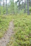 Ajardine com um trajeto na floresta, imagem borrada Imagens de Stock