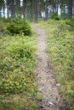 Ajardine com um trajeto na floresta, imagem borrada Imagens de Stock Royalty Free