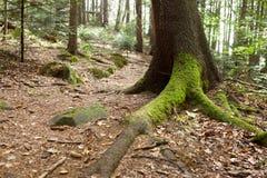 Ajardine com um tronco de árvore coberto com o musgo Fotografia de Stock Royalty Free