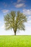Ajardine com uma árvore e as nuvens em um céu azul Imagens de Stock Royalty Free