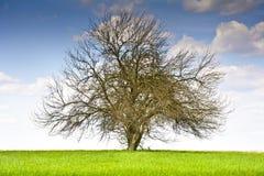 Ajardine com uma árvore e as nuvens em um céu azul Foto de Stock