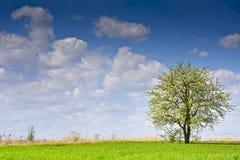 Ajardine com uma árvore e as nuvens em um céu azul Imagem de Stock