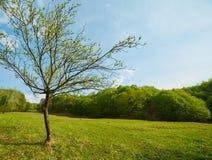 Ajardine com uma árvore nova em um prado Foto de Stock