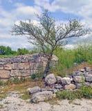 Ajardine com uma árvore perto de uma parede de pedra desmoronada Imagens de Stock