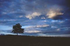 Ajardine com uma árvore só e um baixo céu nebuloso Imagens de Stock