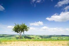 Ajardine com uma árvore só e um céu azul Fotografia de Stock Royalty Free