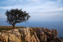 Ajardine com uma árvore só no fundo do Fotografia de Stock