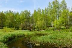 Ajardine com uma árvore seca e a ponte. Fotos de Stock Royalty Free