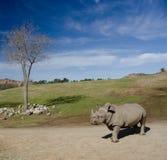 Ajardine com uma árvore seca e um rinoceronte branco sob céus azuis Foto de Stock Royalty Free