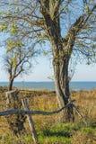 Ajardine com uma árvore velha da acácia na costa alta Fotografia de Stock