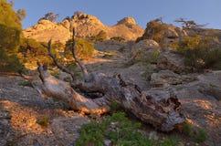 Ajardine com uma árvore velha nas montanhas Imagens de Stock