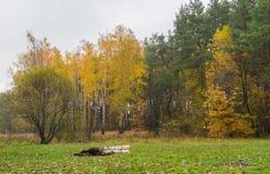 Ajardine com uma borda da floresta do pinho e do vidoeiro em Ucrânia Imagens de Stock