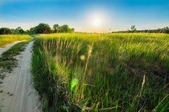 Ajardine com uma estrada arenosa rural e uma grama verde Fotografia de Stock Royalty Free