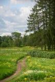 Ajardine com uma estrada através de um campo, flores do campo Imagens de Stock