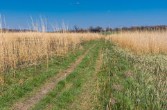 Ajardine com uma estrada de terra à vila remota através do prado rushy da água em Ucrânia central Imagens de Stock Royalty Free