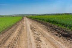 Ajardine com uma estrada de terra entre o trigo e viole campos agrícolas em Ucrânia central Imagem de Stock