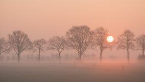 Ajardine com uma fileira das árvores e de um sol de aumentação e um campo de grama com cerca em uma manhã enevoada Fotos de Stock Royalty Free