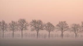Ajardine com uma fileira das árvores e um campo de grama com cerca em uma manhã enevoada Imagem de Stock