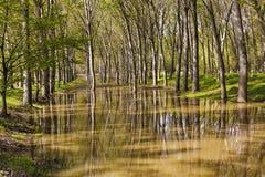 Ajardine com uma floresta de árvores do hornbeam nos pântanos com reflec Fotografia de Stock Royalty Free