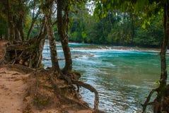 Ajardine com uma ideia de raizes da água e da árvore de turquesa México, água Azul da cachoeira, Palenque Chiapas Fotos de Stock Royalty Free