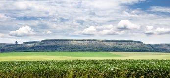 Ajardine com uma montanha e um campo da grama verde Imagem de Stock Royalty Free